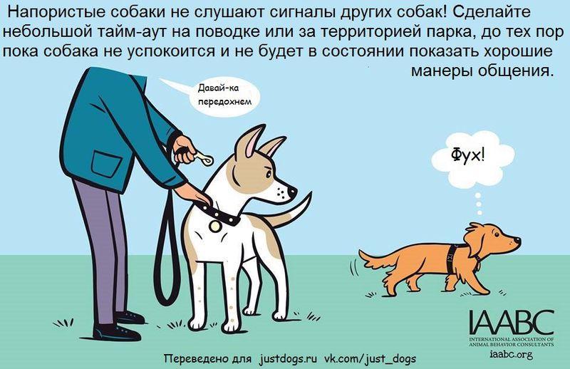 Советы начинающему собаководу (в картинках) - Страница 2 N5kd46