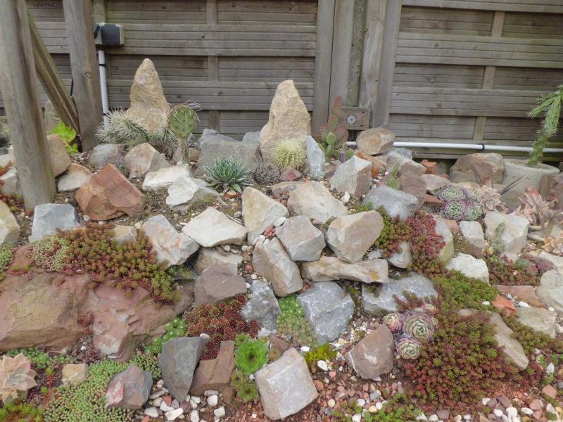 mon jardin dans les hauts de france - Page 2 Qrma92