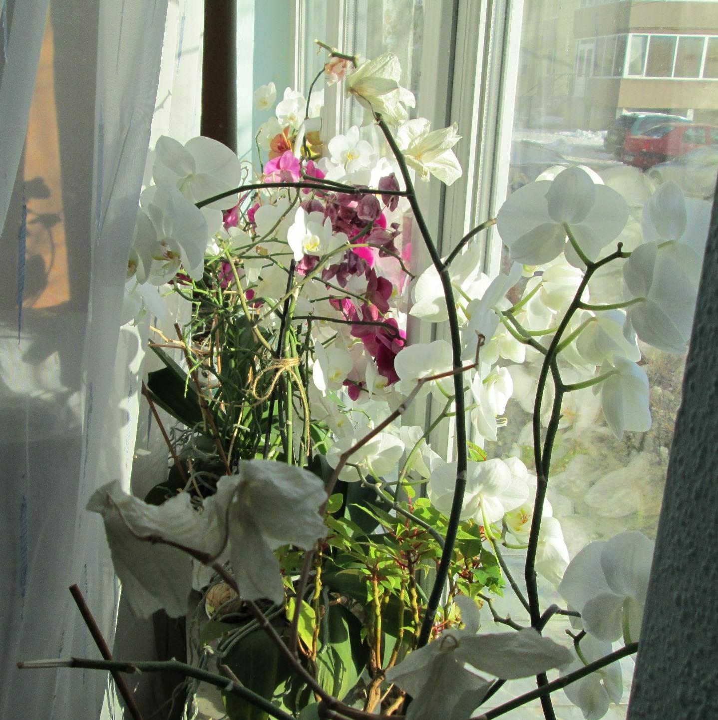 Flori si gradini - Pagina 31 T7inw8