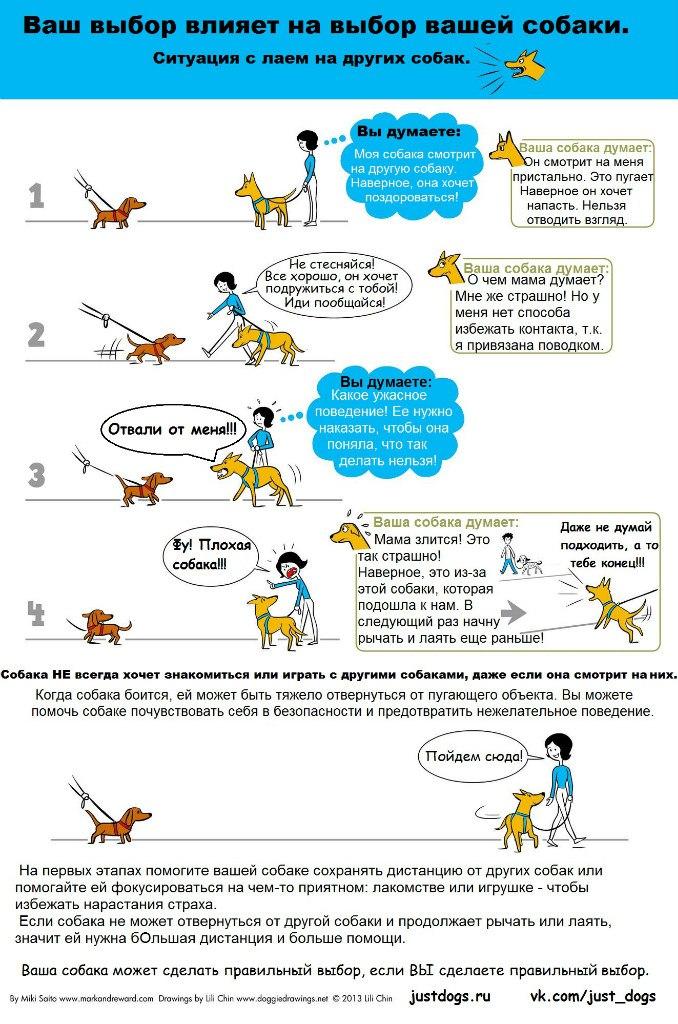 Советы начинающему собаководу (в картинках) - Страница 2 23s9kt4
