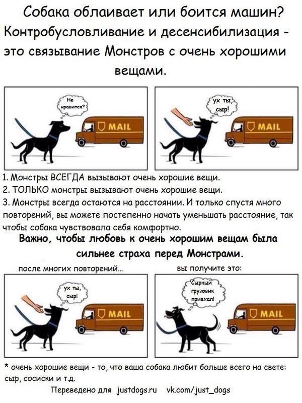 Советы начинающему собаководу (в картинках) - Страница 3 2q8u2dg