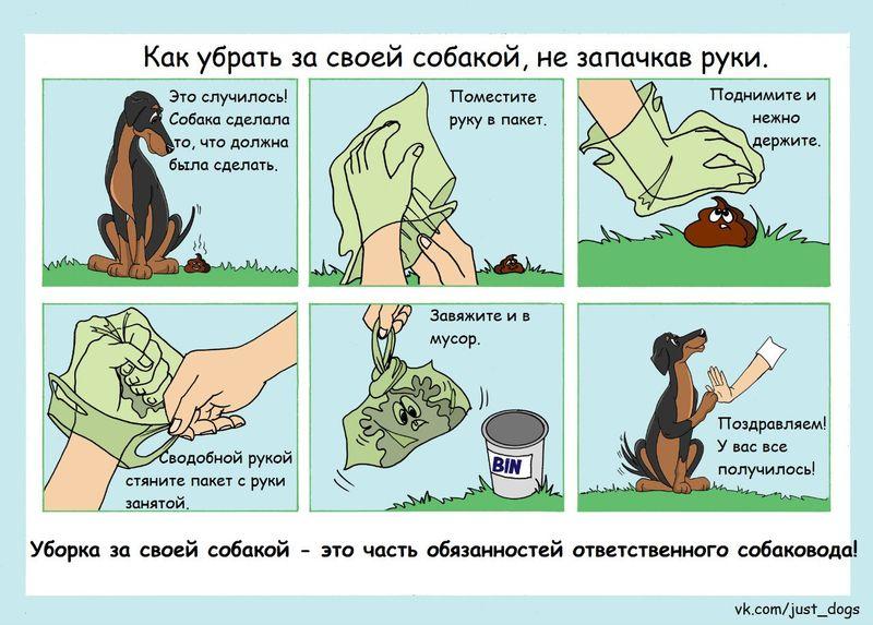 Советы начинающему собаководу (в картинках) - Страница 3 2s64t9w