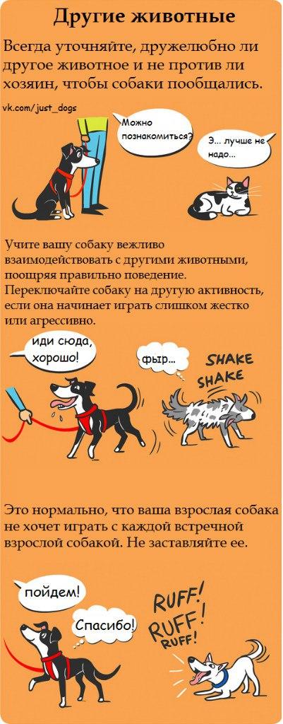 Советы начинающему собаководу (в картинках) - Страница 2 9zvslj