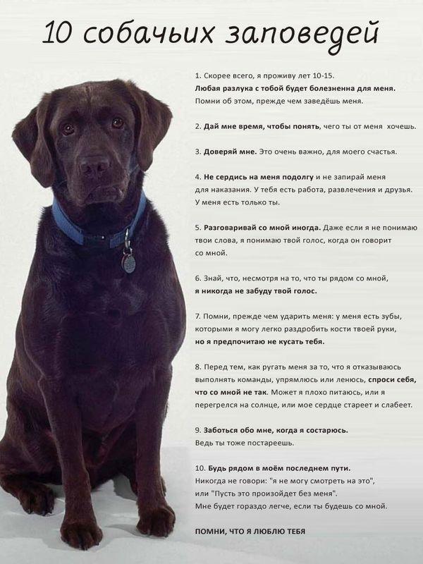Советы начинающему собаководу (в картинках) - Страница 3 A9s6k6