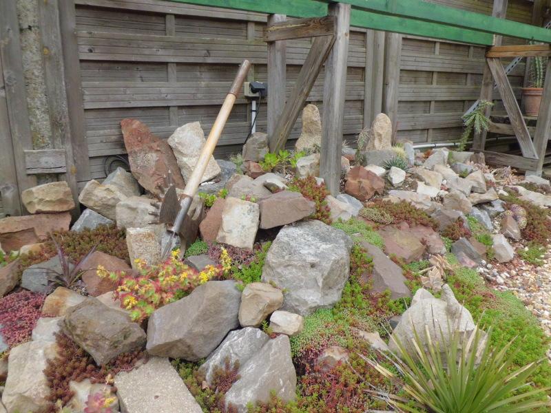 mon jardin dans les hauts de france - Page 2 Nmjhgi