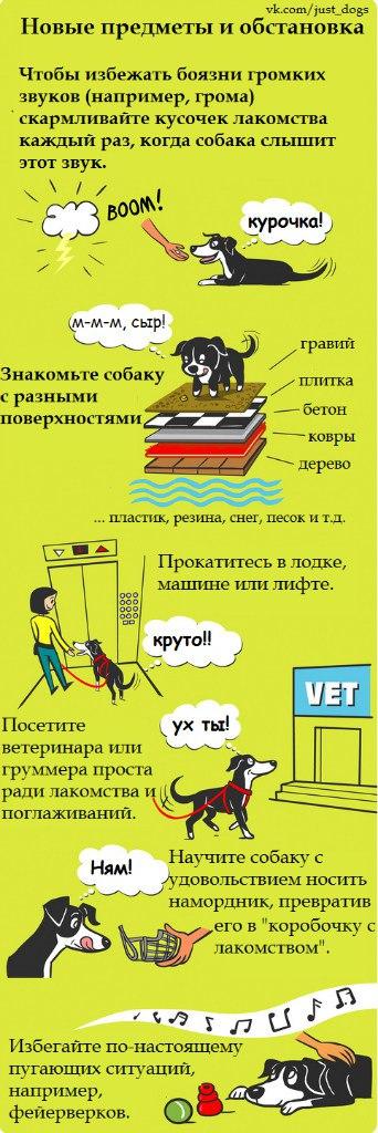 Советы начинающему собаководу (в картинках) - Страница 2 Qnrxfs
