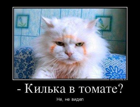 Поюморим? Смех продлевает жизнь) Wb4f1g
