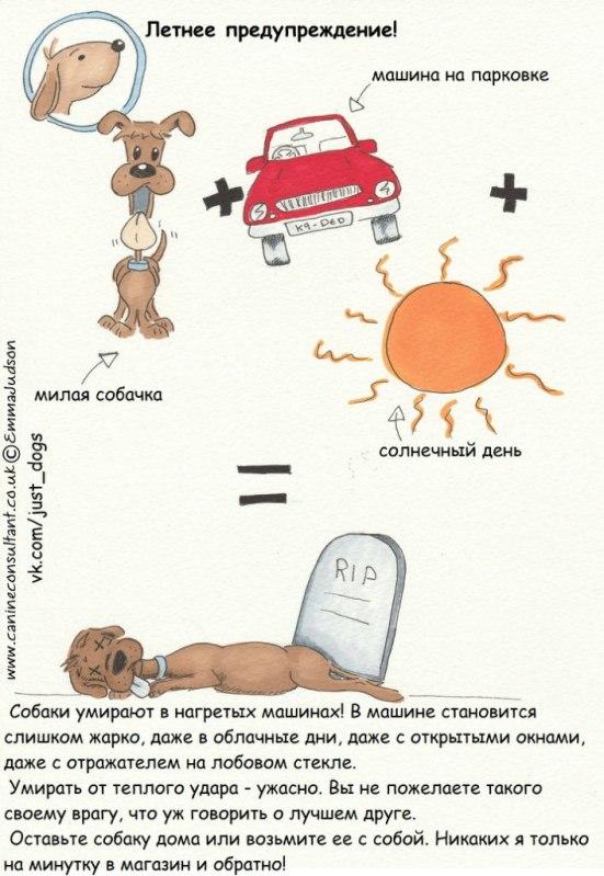Советы начинающему собаководу (в картинках) 29ld8bb