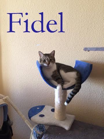 Fidel y Milk, pareja gatuna en adopción. (FN. Abril 2012) ¡Adoptados! 29mvllc