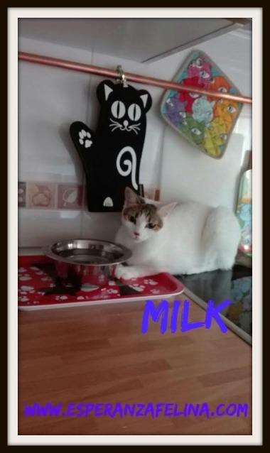 Fidel y Milk, pareja gatuna en adopción. (FN. Abril 2012) ¡Adoptados! 29z68er