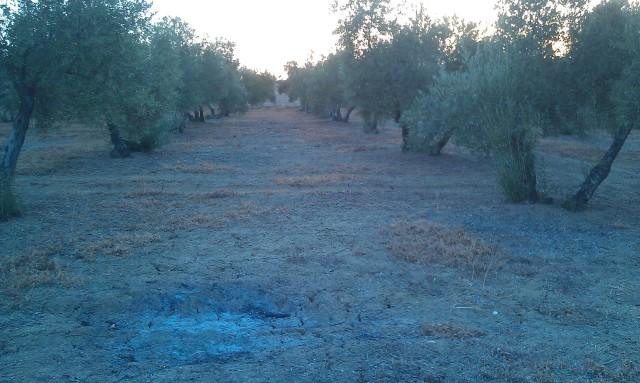 Olivar a finales de verano en Sierra Morena y el alto Guadalquivir - Página 3 2hd8dw0