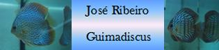 Guimadiscos - José Ribeiro