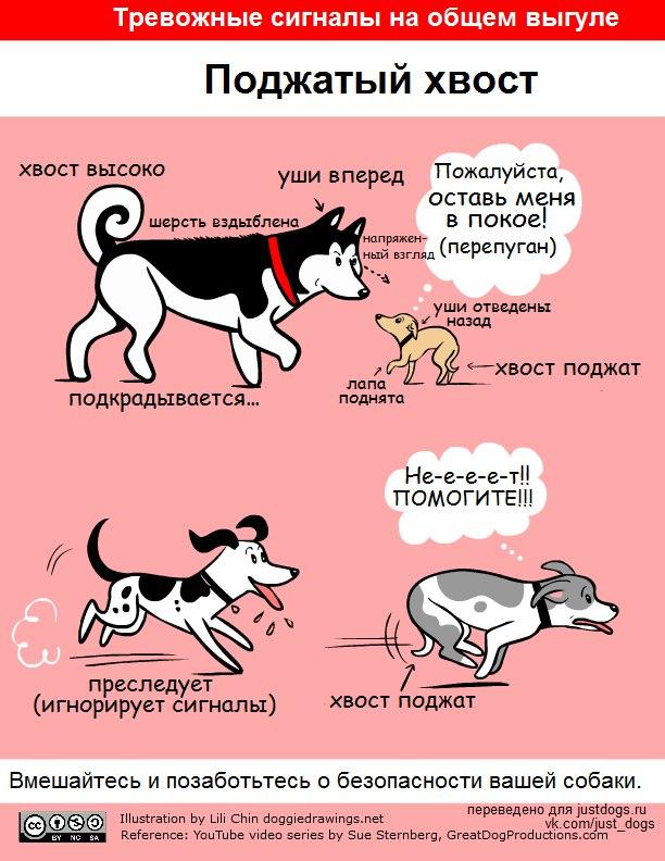 Советы начинающему собаководу (в картинках) - Страница 2 2vv8gh1