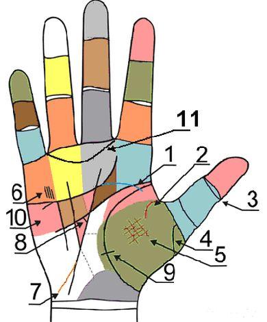 Главные и второстепенные линии на руках 2z7ee0p