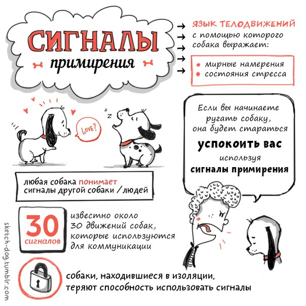 Советы начинающему собаководу (в картинках) - Страница 2 3166grp