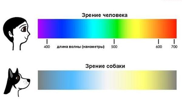 Доказано: собаки различают цвета Fo3p78
