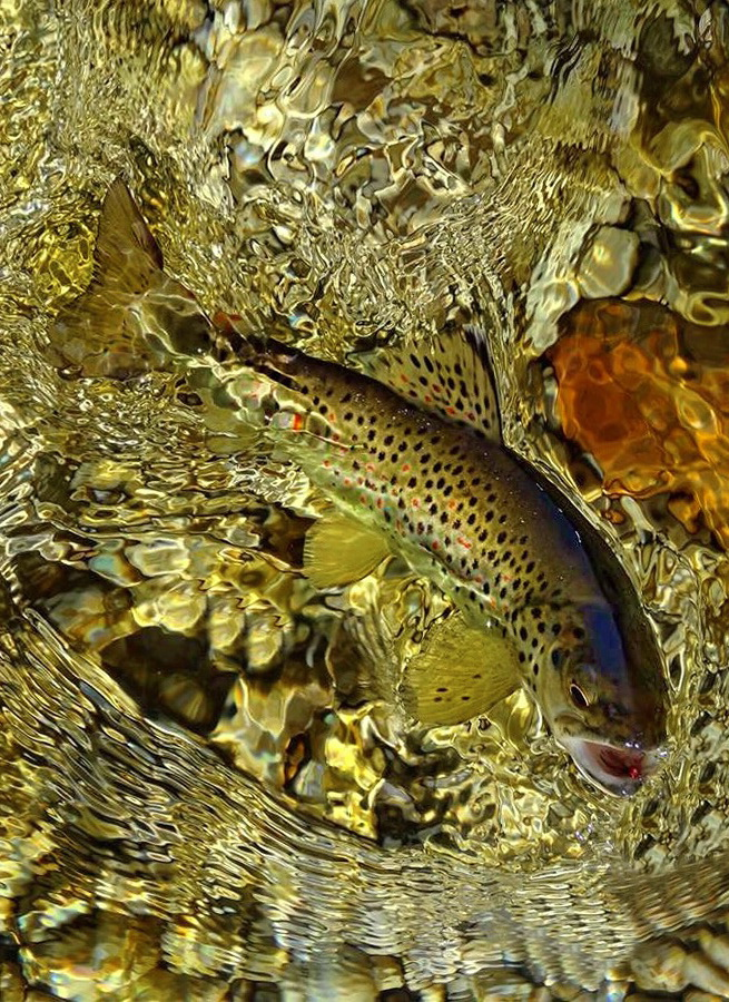 Fotografije ulova, ribe, oprema i dr. Jqre5e