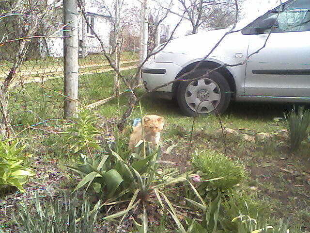 Садовые товарищи - Страница 4 Ohiywx