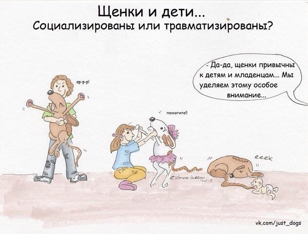 Советы начинающему собаководу (в картинках) - Страница 3 P584i