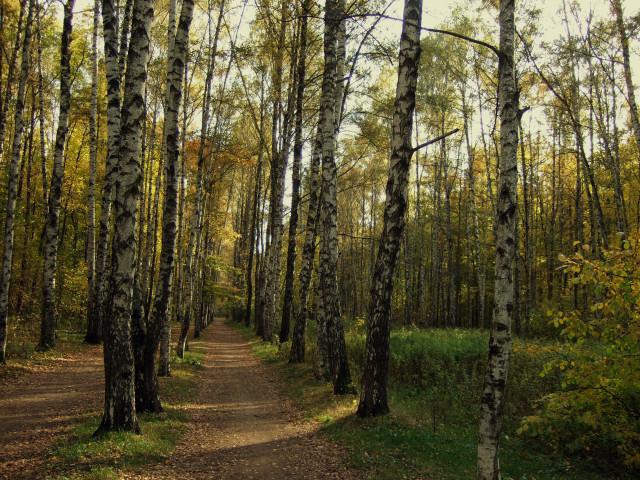 Лосиноостровский вошёл в число лучших районов Москвы по экологическим показателям Qzkbau