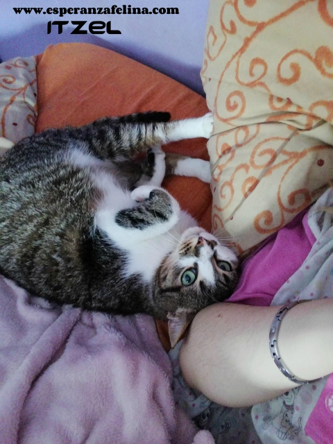 Itzel, preciosa gatita. Álava. (Fec. Nac. Aprox. 01/07/2012) R0xhn9