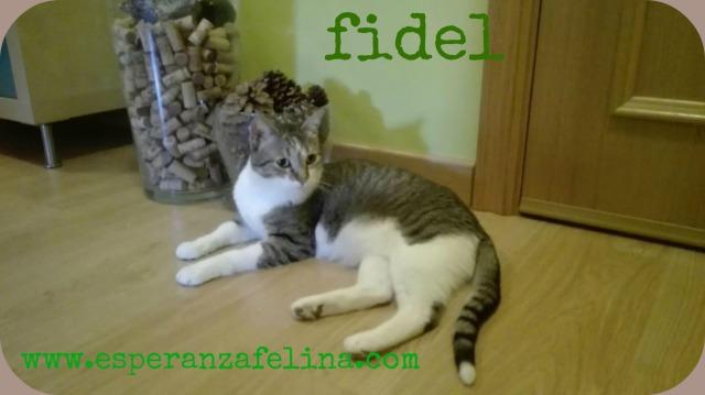 Fidel y Milk, pareja gatuna en adopción. (FN. Abril 2012) ¡Adoptados! X6c07r