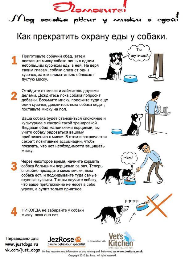 Советы начинающему собаководу (в картинках) Xqexwy