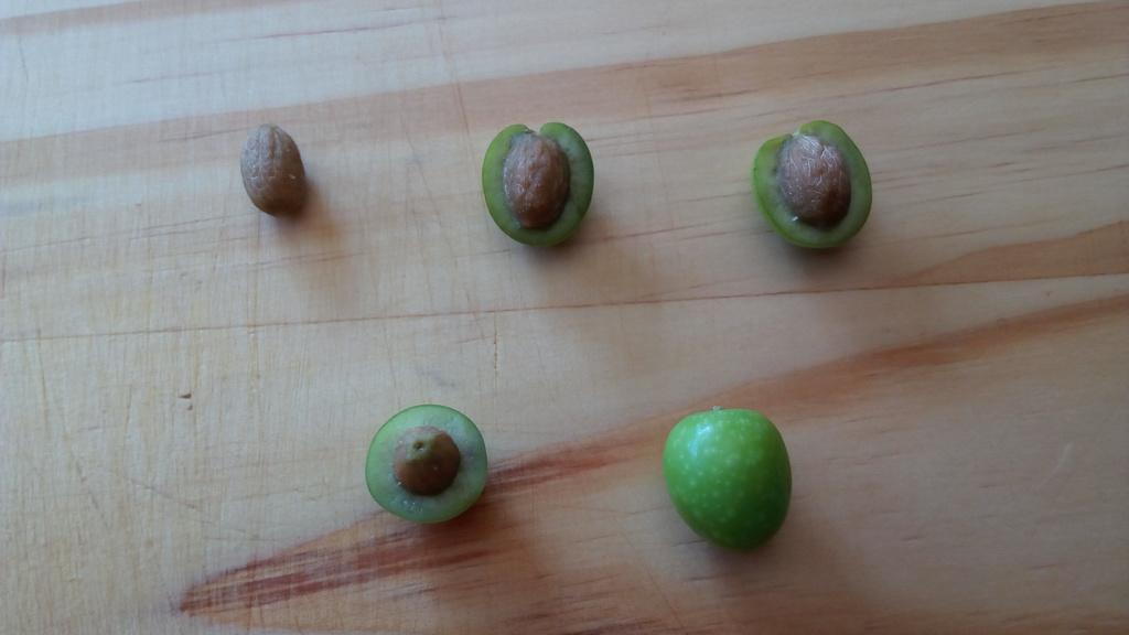 ¿Alguien me puede ayudar a identificar qué tipo de olivos tengo? 125194j