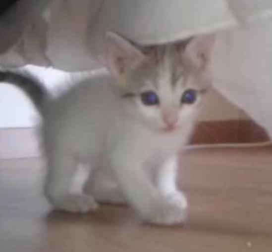 Χαριζεται μωρο γατακι 153b0uq