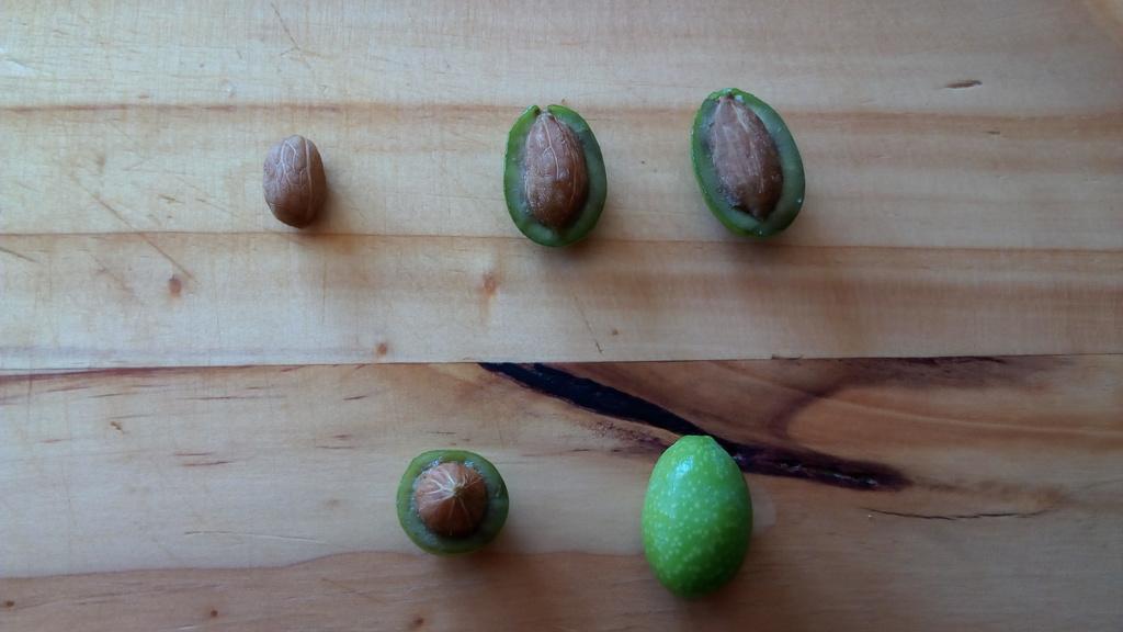 ¿Alguien me puede ayudar a identificar qué tipo de olivos tengo? 20967hg