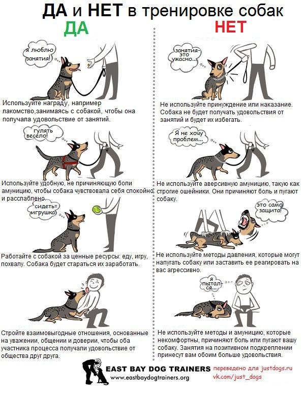 Советы начинающему собаководу (в картинках) 2aqgkl