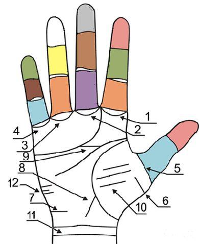 Главные и второстепенные линии на руках 2dbndli