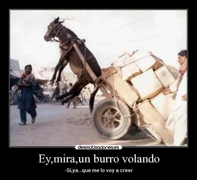 Si amigos, los burros vuelan. 2hycdvk