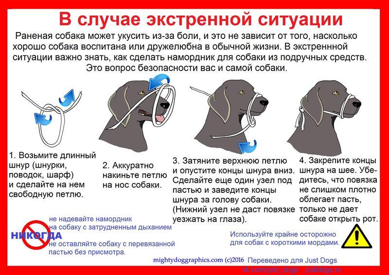 Советы начинающему собаководу (в картинках) 2i108wp