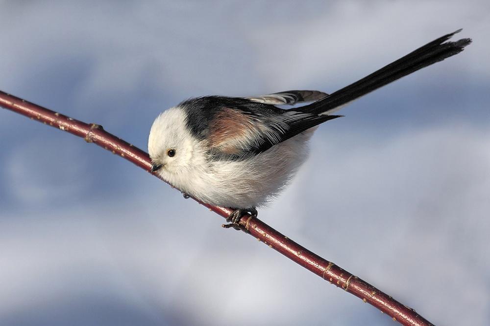 Птицы  калужского бора 2jdl7rq
