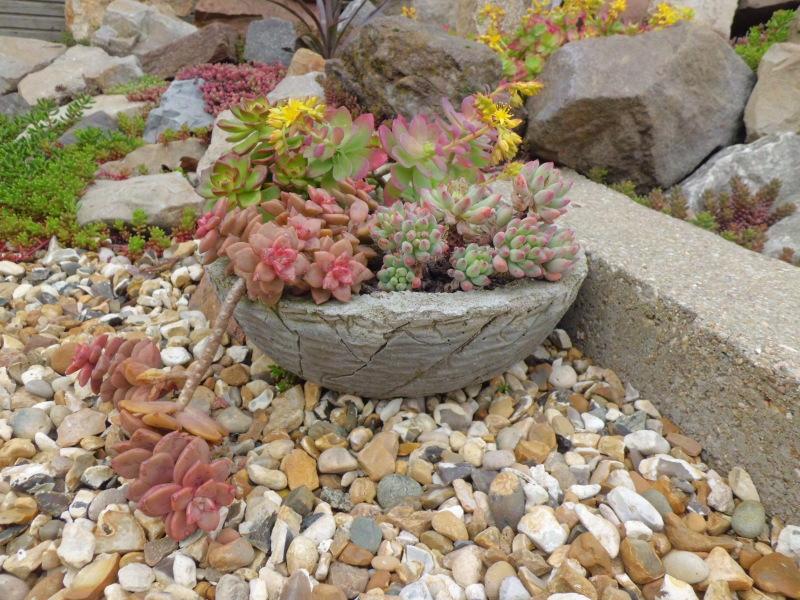 mon jardin dans les hauts de france - Page 2 2znocok
