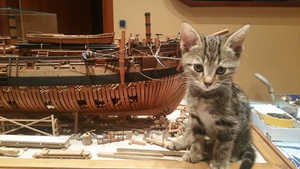 Maketarske mačke 4sff2c