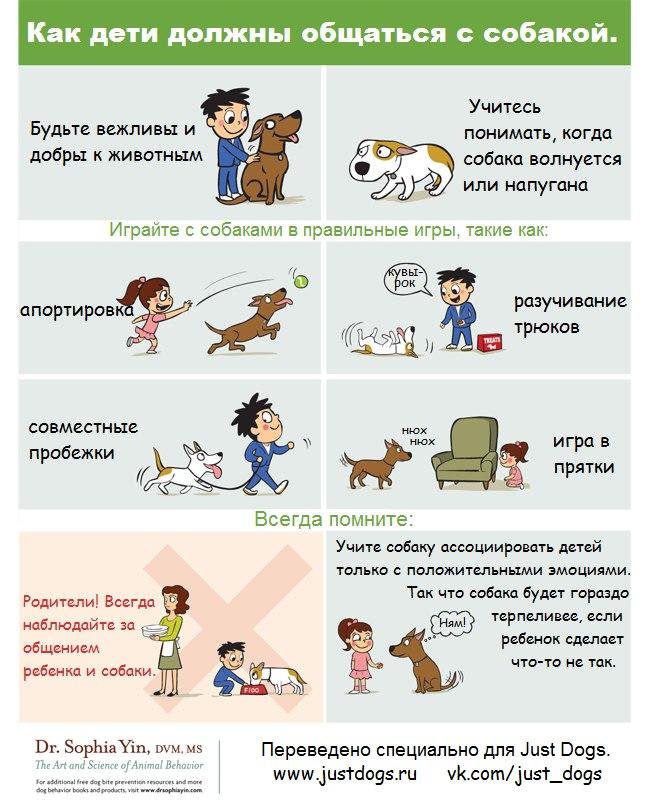 Советы начинающему собаководу (в картинках) - Страница 3 A5f7k6