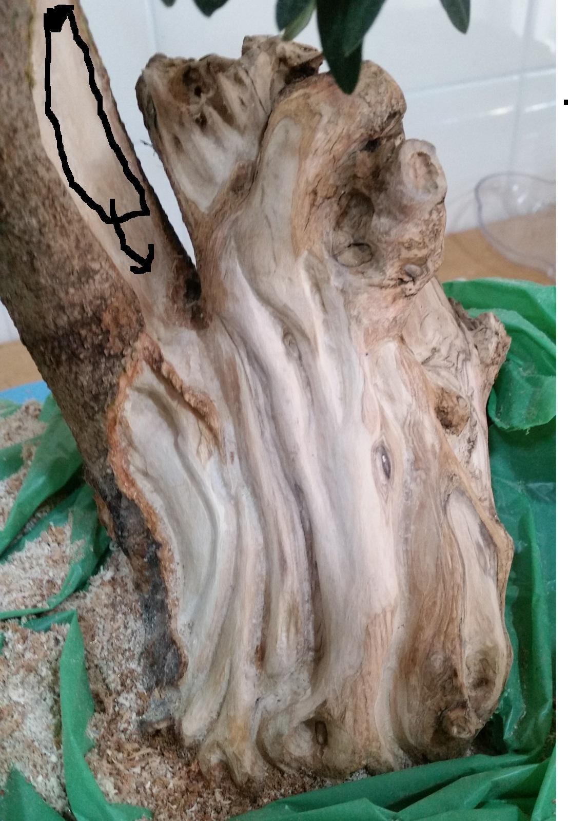 a ver que os parece el trabajo de madera en mi olivo Aw9wdi