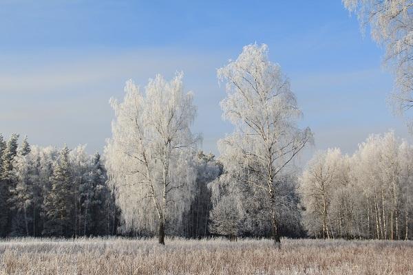 Лосиноостровский вошёл в число лучших районов Москвы по экологическим показателям Hrebup