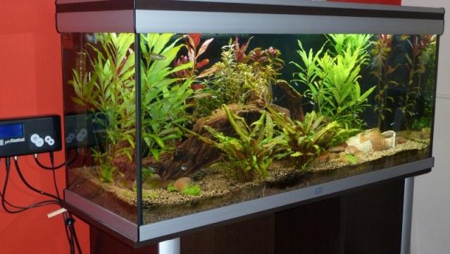 polystyrène sous l'aquarium? Nn73x2