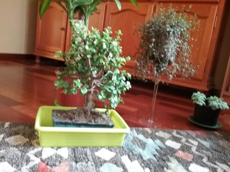 Mi primer bonsai R22oeh