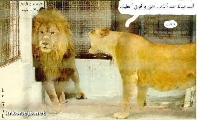 اضحك من قلبك !!!! 4qx5f1s