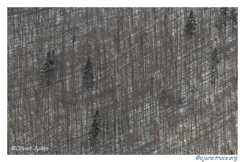 Quelques photos d'Olivier J. paysages et animaux jurassiens 20090624084726-4cfe8991