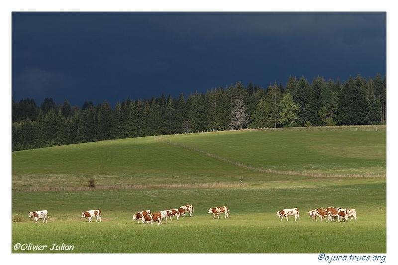 Quelques photos d'Olivier J. paysages et animaux jurassiens 20090726225244-d62bdce9