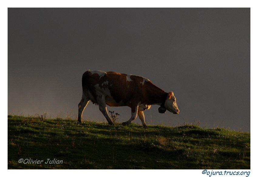 Quelques photos d'Olivier J. paysages et animaux jurassiens 20100923121700-f2b8c2db