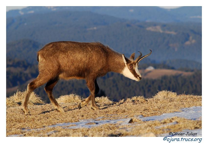 Quelques photos d'Olivier J. paysages et animaux jurassiens 20110201214014-be776789