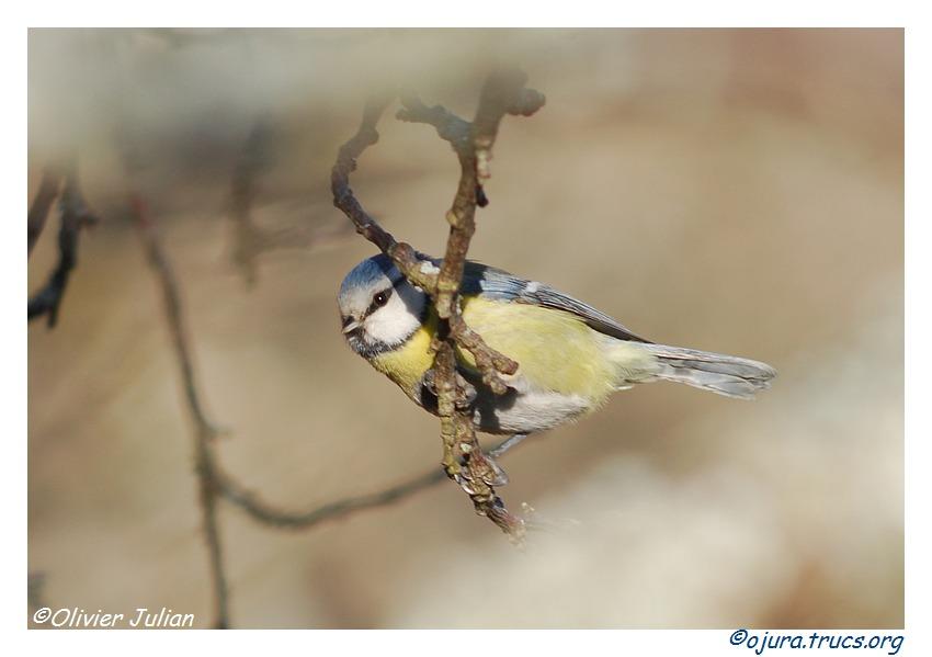 Quelques photos d'Olivier J. paysages et animaux jurassiens 20110317202703-a8ad4ffe