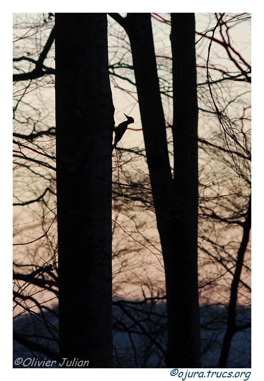 Quelques animaux vus cet hiver 20120316211211-935949ed