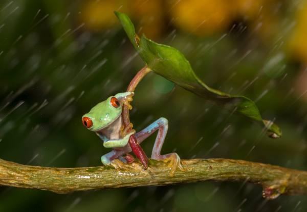 PRŠÍ, to je dobre One_eyeland_oh_no_it_is_raining_by_kutub%20uddin%20macro-man__135418